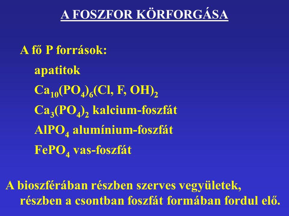 A FOSZFOR KÖRFORGÁSA A fő P források: apatitok. Ca10(PO4)6(Cl, F, OH)2. Ca3(PO4)2 kalcium-foszfát.