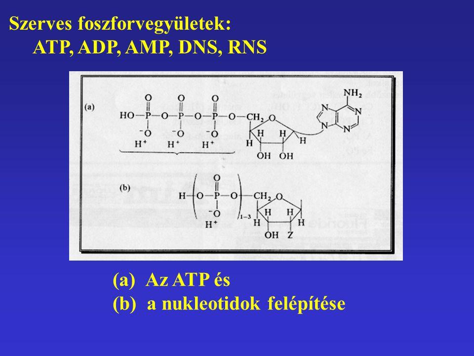 Szerves foszforvegyületek: ATP, ADP, AMP, DNS, RNS