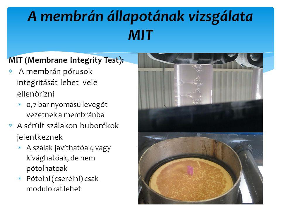 A membrán állapotának vizsgálata MIT