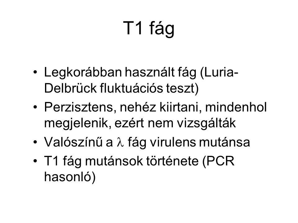 T1 fág Legkorábban használt fág (Luria-Delbrück fluktuációs teszt)