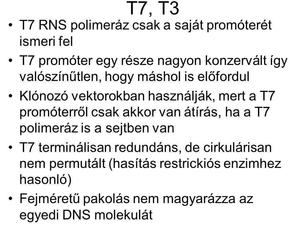 T7, T3 T7 RNS polimeráz csak a saját promóterét ismeri fel