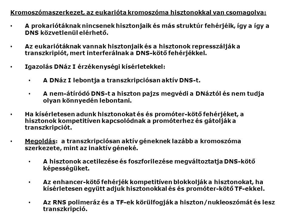 Kromoszómaszerkezet, az eukarióta kromoszóma hisztonokkal van csomagolva: