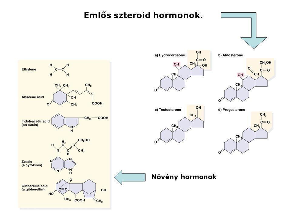 Emlős szteroid hormonok.