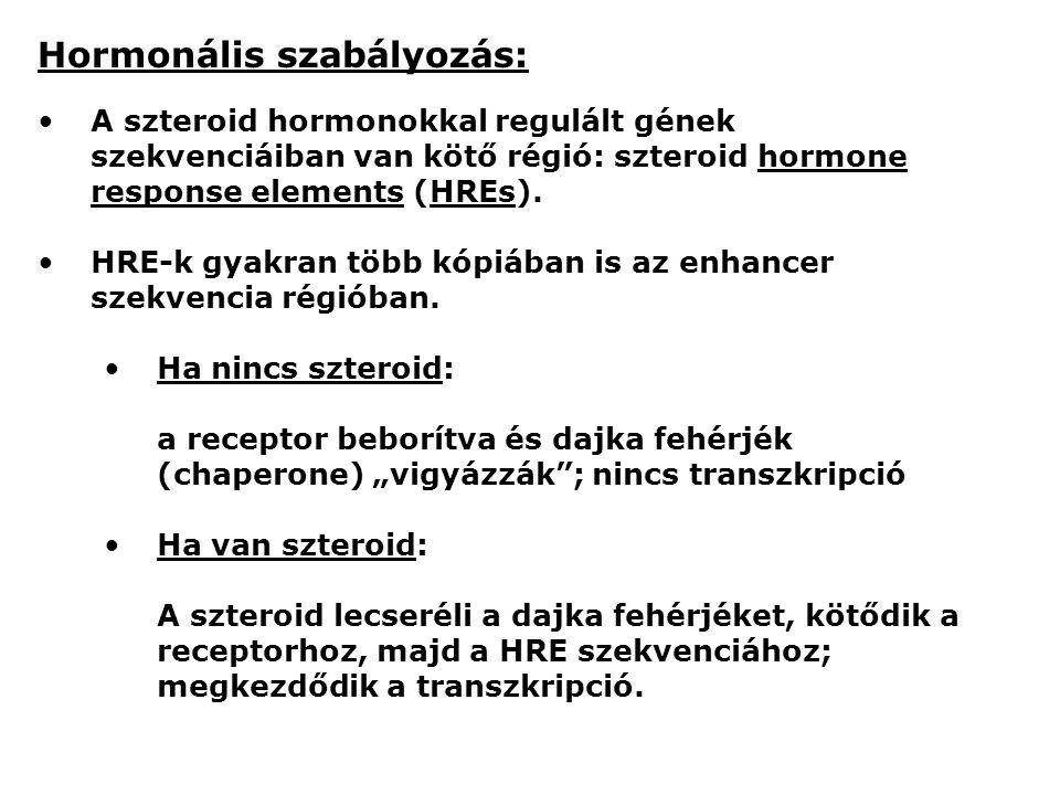 Hormonális szabályozás: