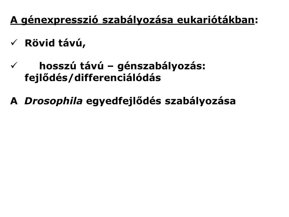 A génexpresszió szabályozása eukariótákban: