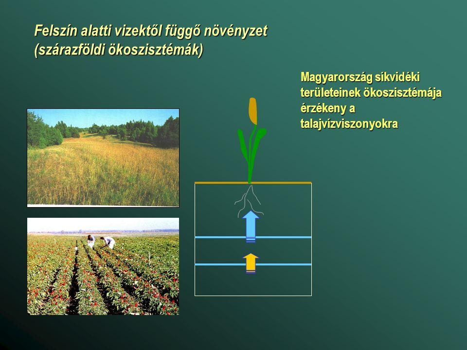 Felszín alatti vizektől függő növényzet (szárazföldi ökoszisztémák)