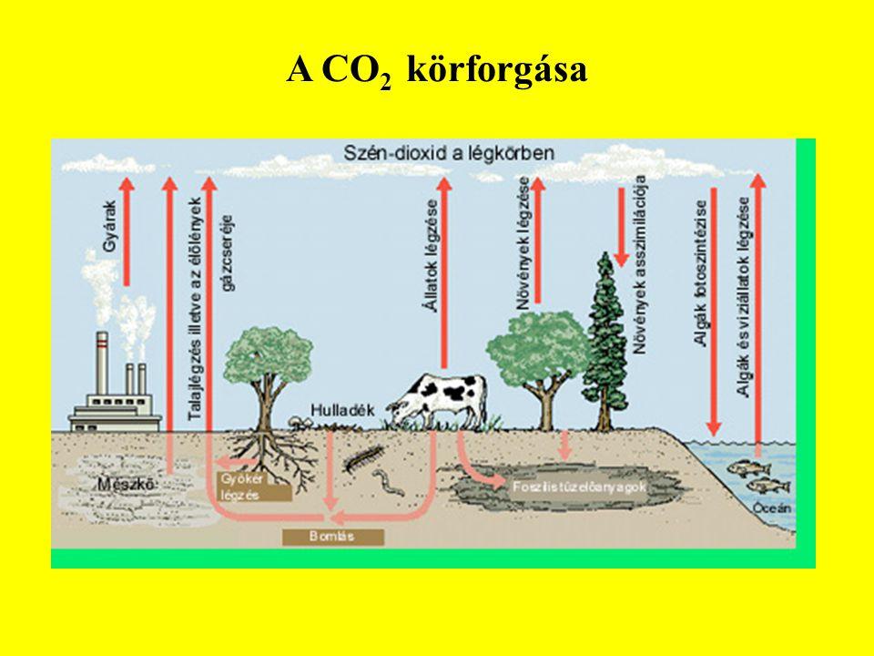 A CO2 körforgása