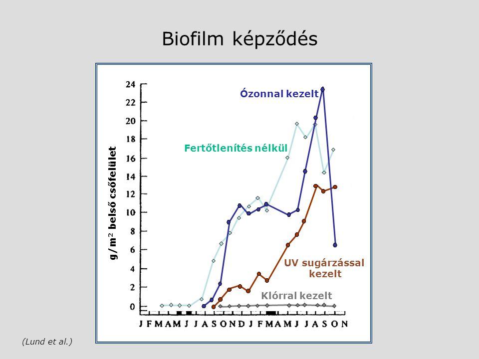 Biofilm képződés Ózonnal kezelt Fertőtlenítés nélkül