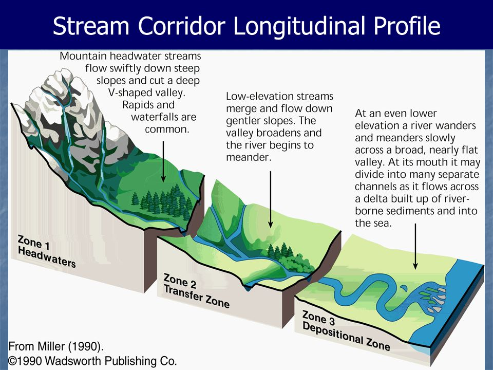 Stream Corridor Longitudinal Profile