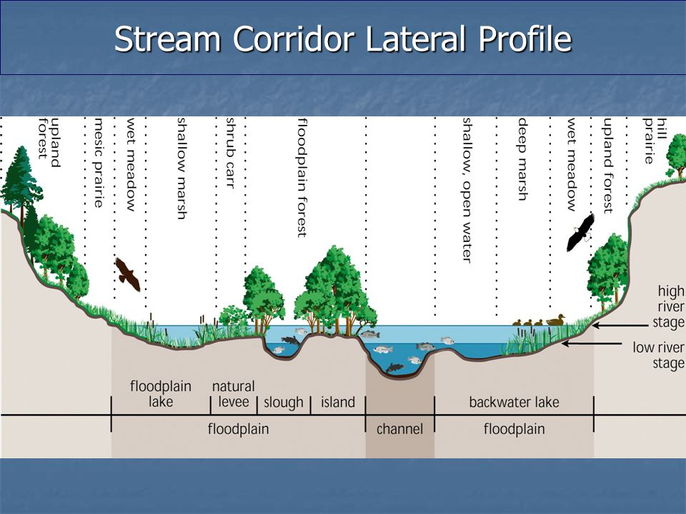 Stream Corridor Lateral Profile