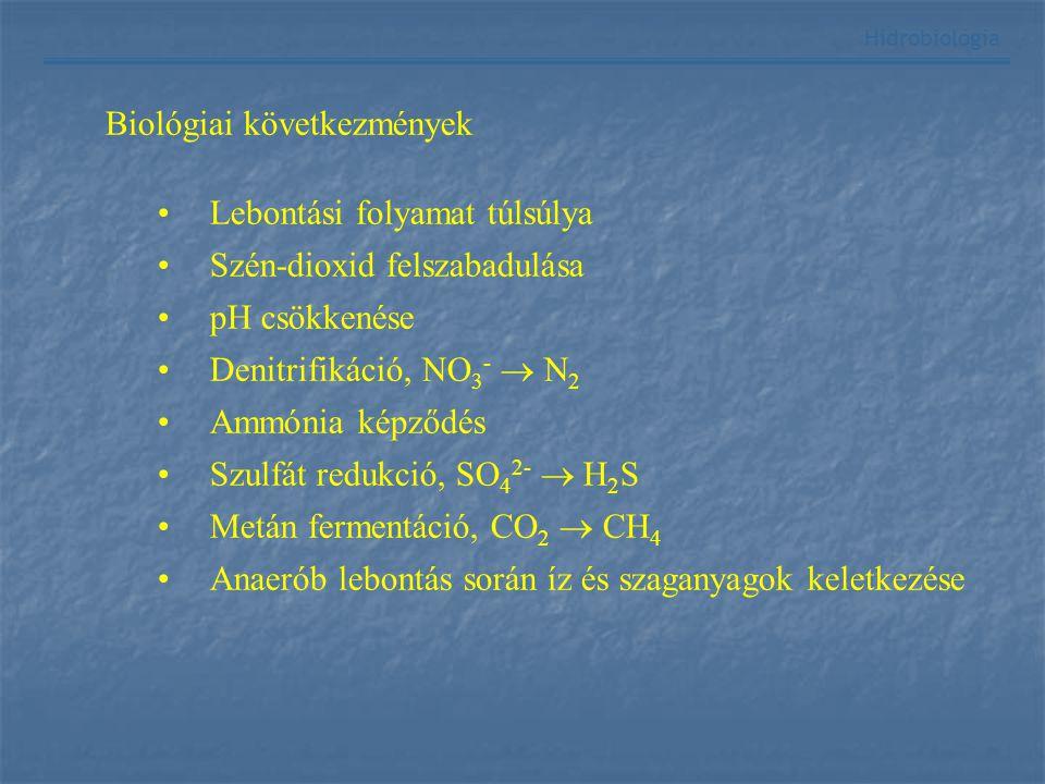 Biológiai következmények Lebontási folyamat túlsúlya