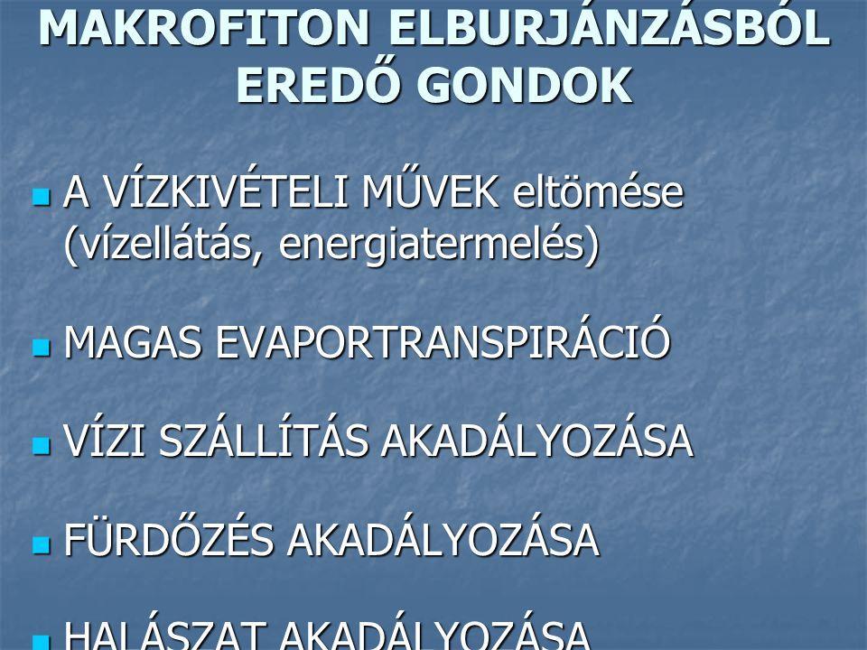 MAKROFITON ELBURJÁNZÁSBÓL EREDŐ GONDOK