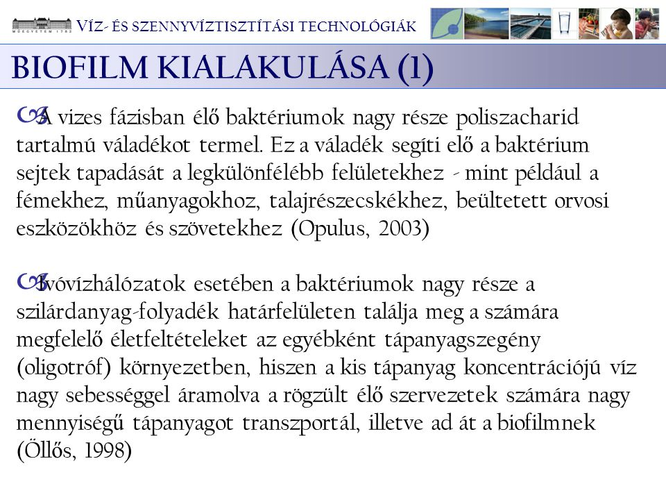 BIOFILM KIALAKULÁSA (1)