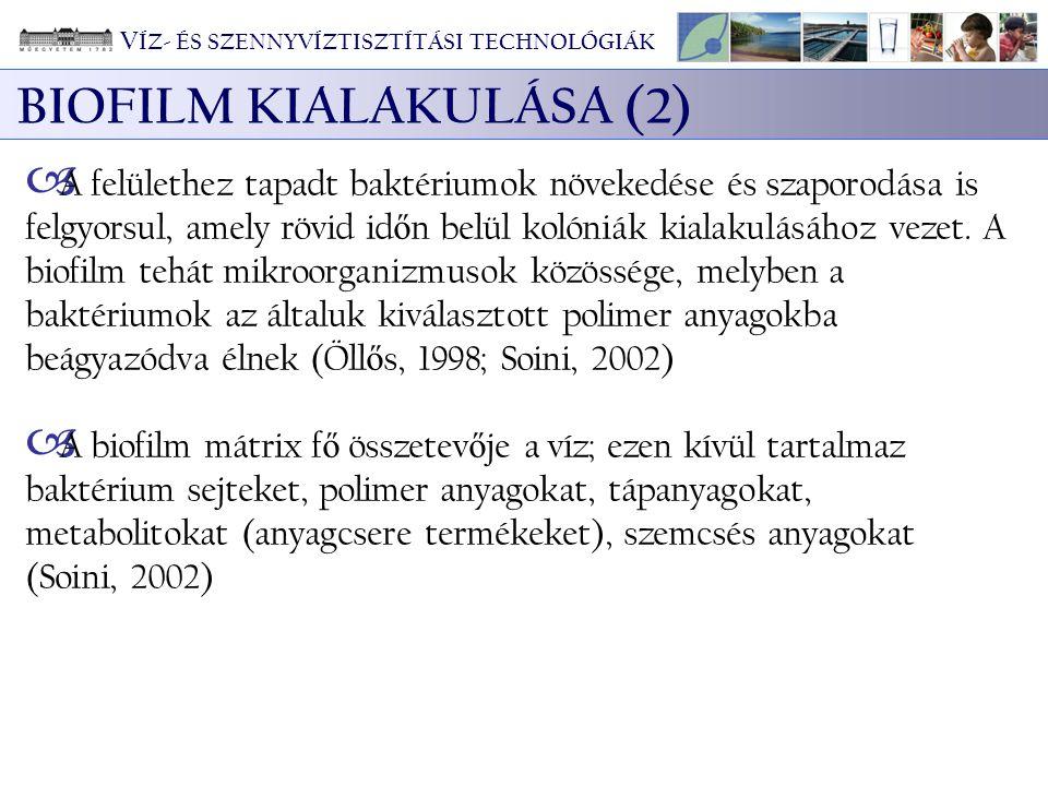 BIOFILM KIALAKULÁSA (2)