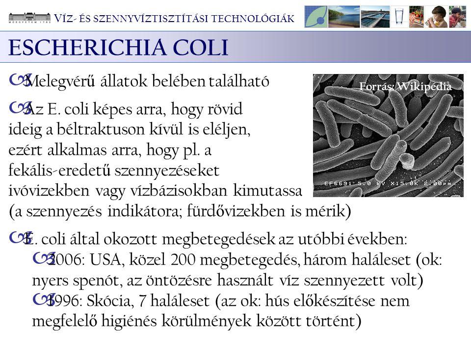 ESCHERICHIA COLI Melegvérű állatok belében található
