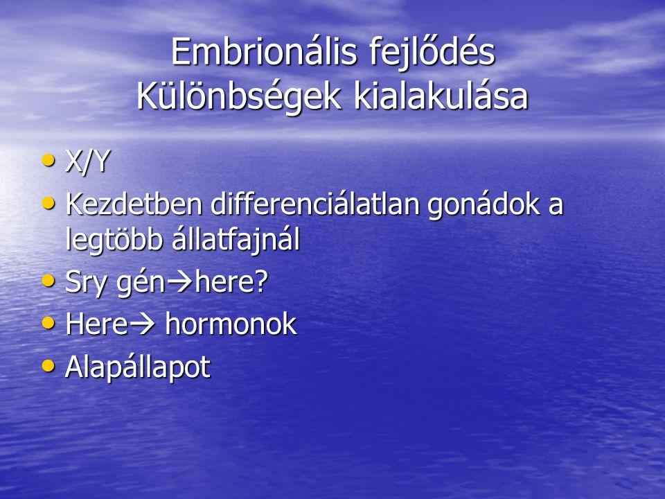 Embrionális fejlődés Különbségek kialakulása