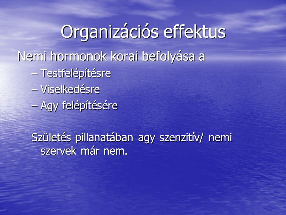 Organizációs effektus