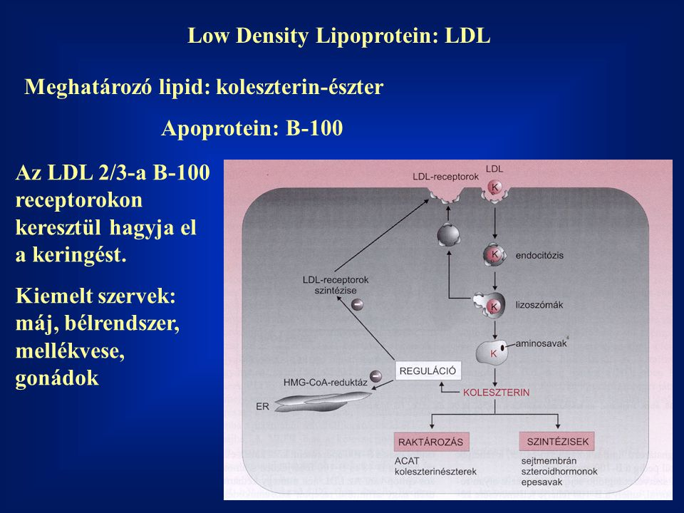 Low Density Lipoprotein: LDL