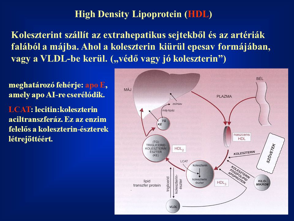 High Density Lipoprotein (HDL)