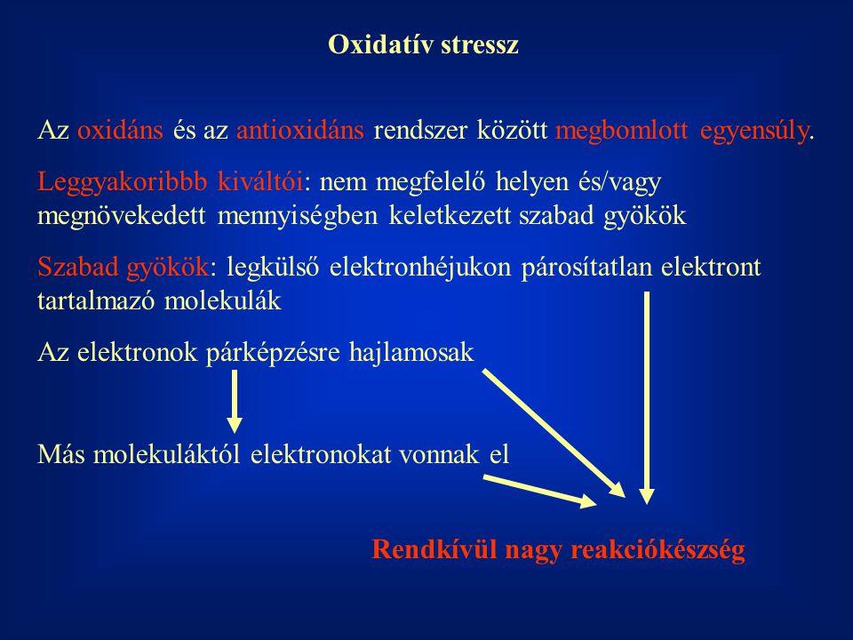 Oxidatív stressz Az oxidáns és az antioxidáns rendszer között megbomlott egyensúly.