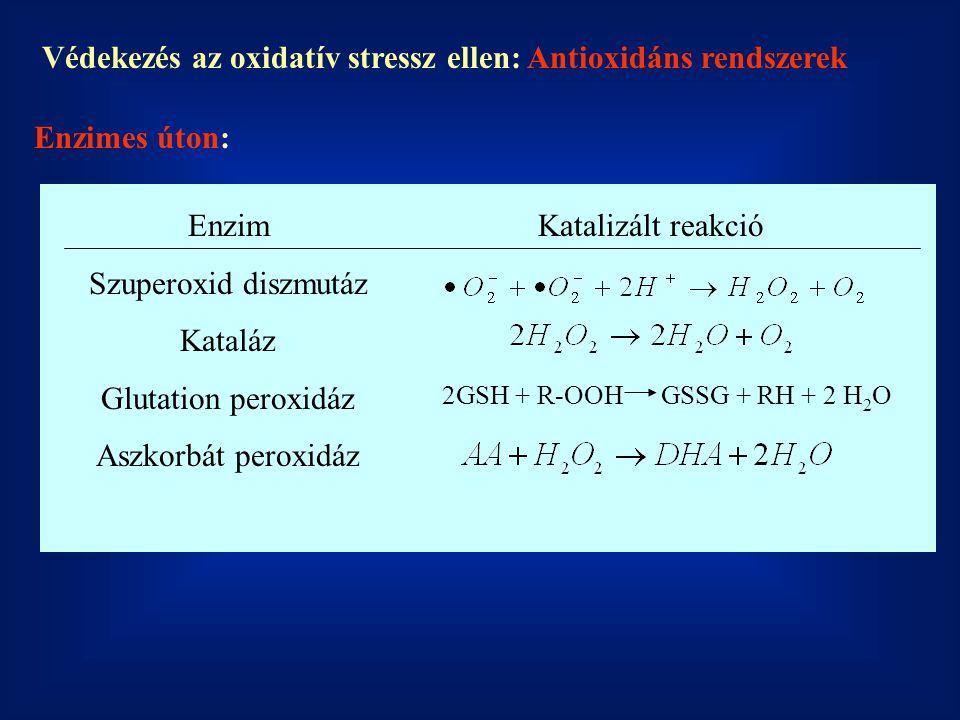 Védekezés az oxidatív stressz ellen: Antioxidáns rendszerek