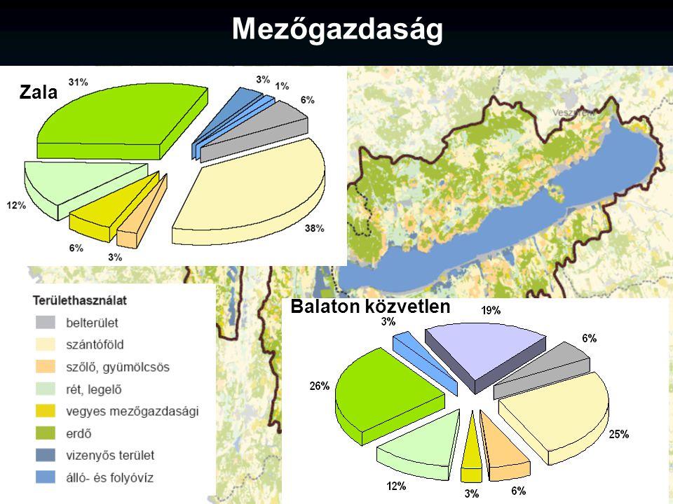 Mezőgazdaság Zala Balaton közvetlen