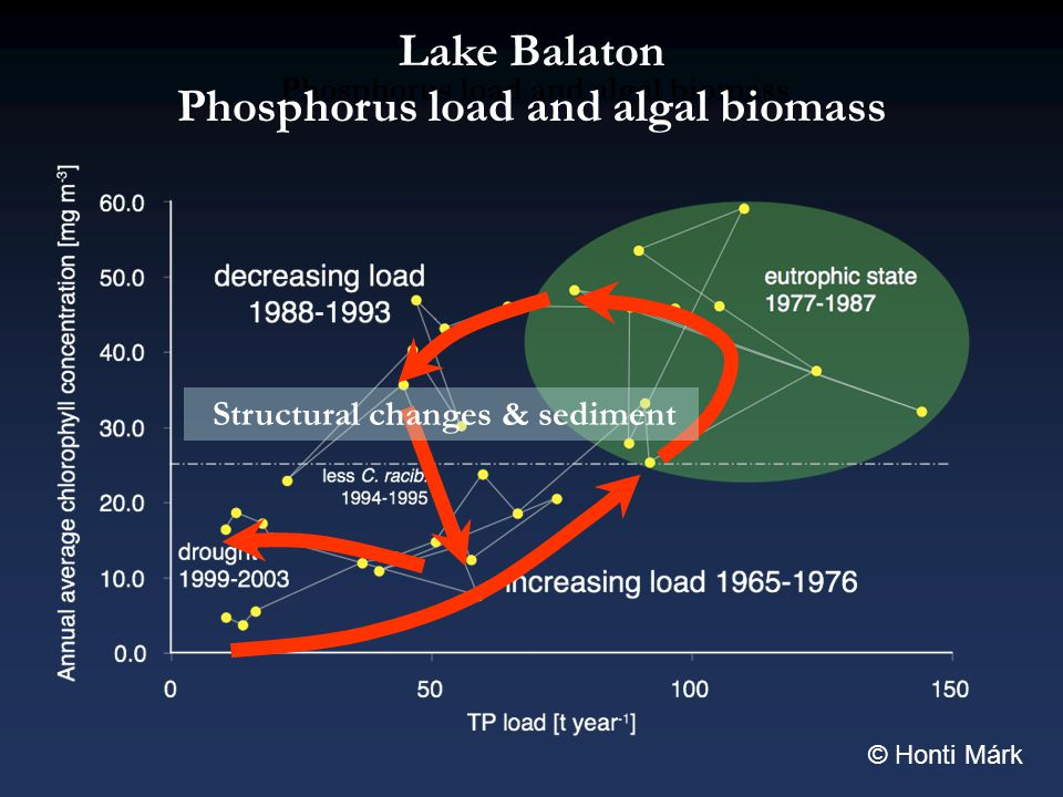Phosphorus load and algal biomass