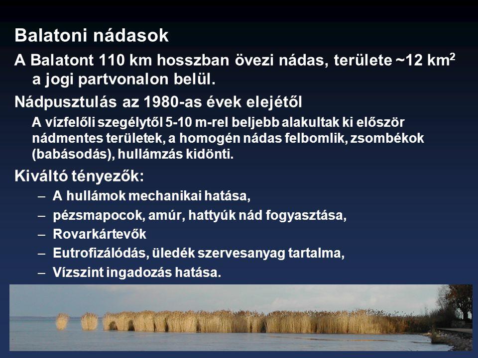 Balatoni nádasok A Balatont 110 km hosszban övezi nádas, területe ~12 km2 a jogi partvonalon belül.
