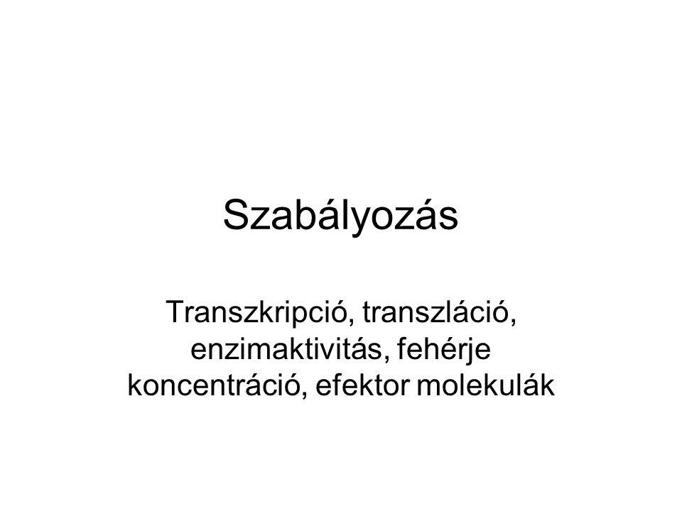 Szabályozás Transzkripció, transzláció, enzimaktivitás, fehérje koncentráció, efektor molekulák