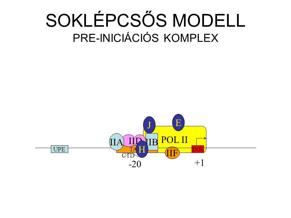 SOKLÉPCSŐS MODELL PRE-INICIÁCIÓS KOMPLEX