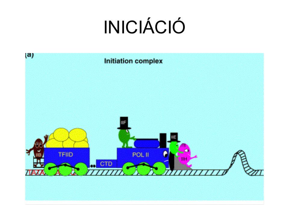 INICIÁCIÓ