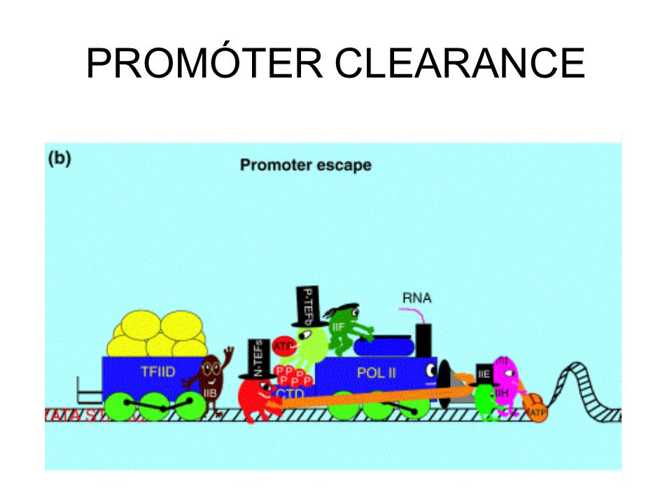 PROMÓTER CLEARANCE