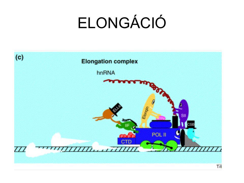 ELONGÁCIÓ