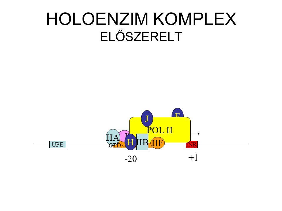 HOLOENZIM KOMPLEX ELŐSZERELT