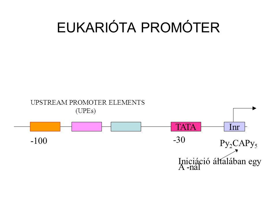 EUKARIÓTA PROMÓTER TATA Inr -100 -30 Py2CAPy5