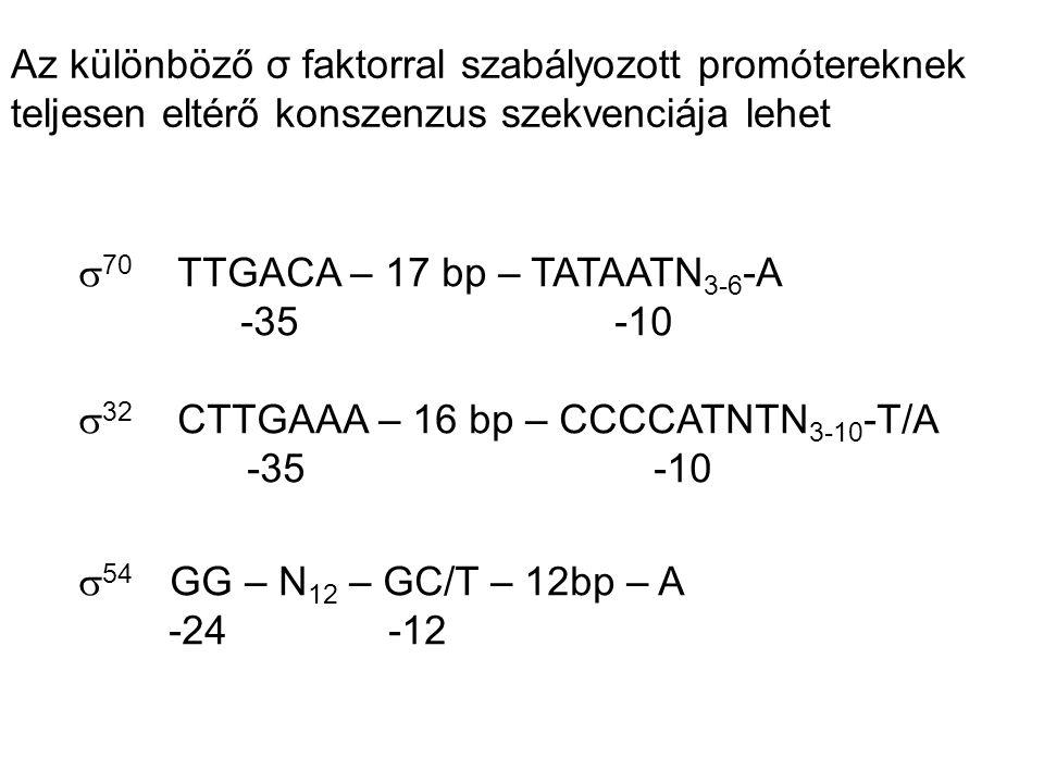 Az különböző σ faktorral szabályozott promótereknek teljesen eltérő konszenzus szekvenciája lehet