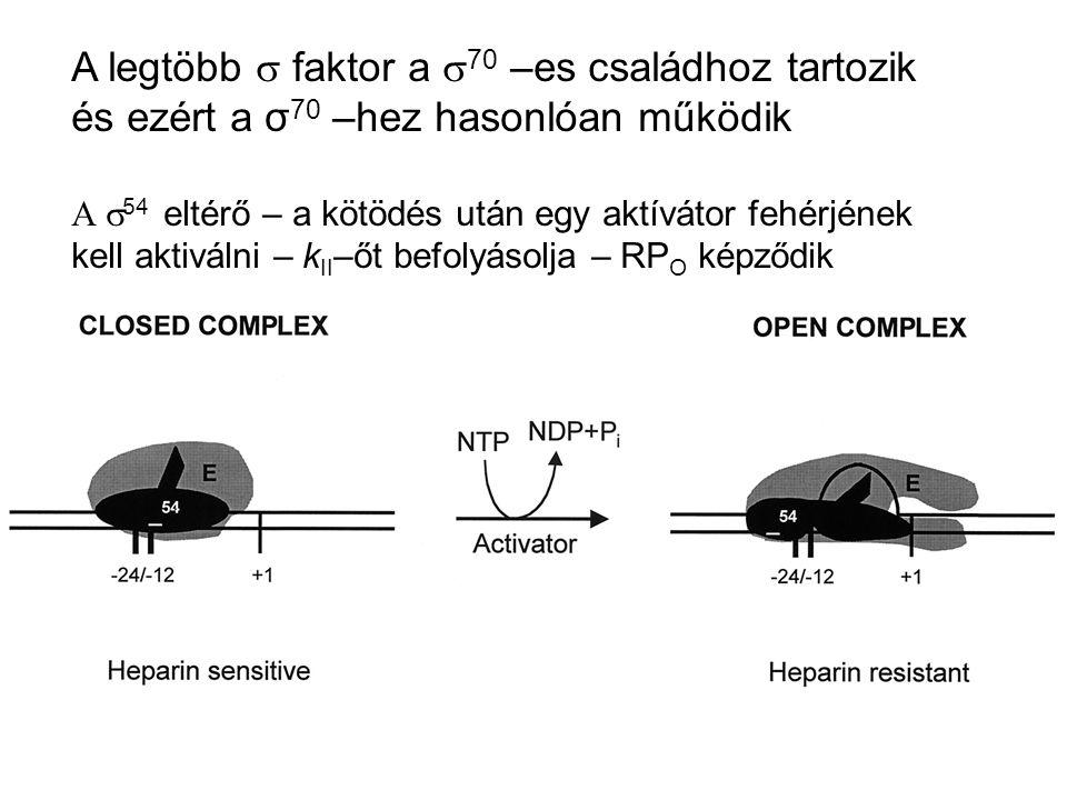 A legtöbb s faktor a s70 –es családhoz tartozik és ezért a σ70 –hez hasonlóan működik