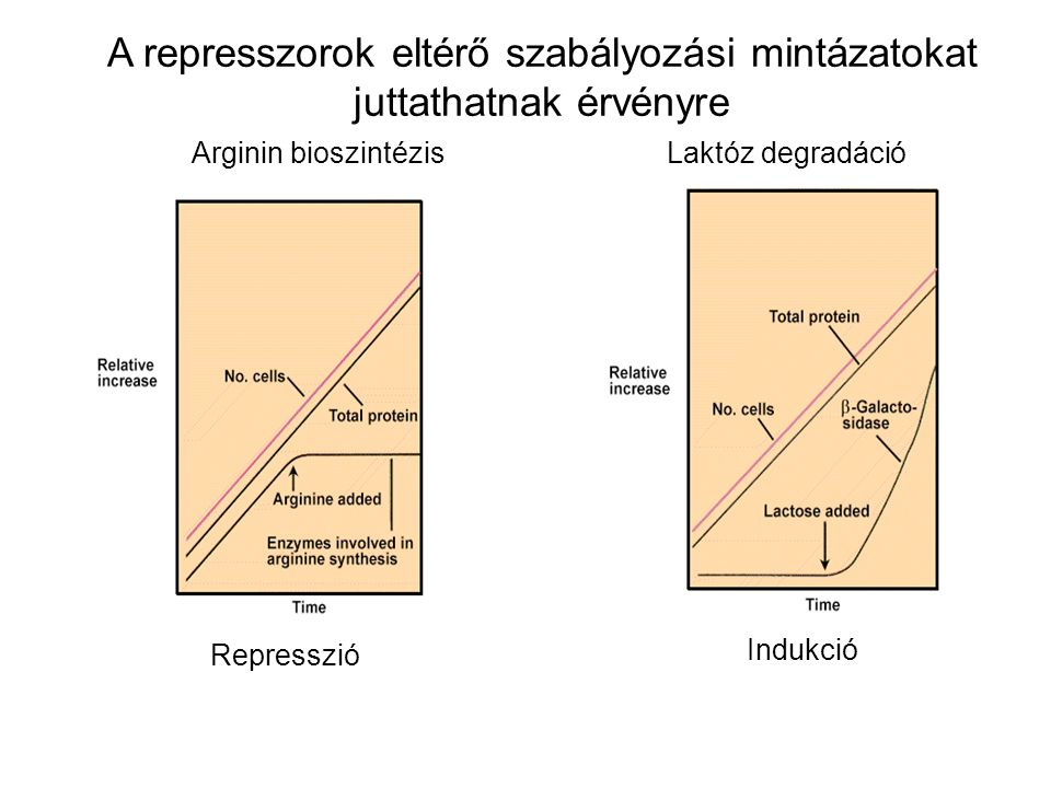 A represszorok eltérő szabályozási mintázatokat juttathatnak érvényre