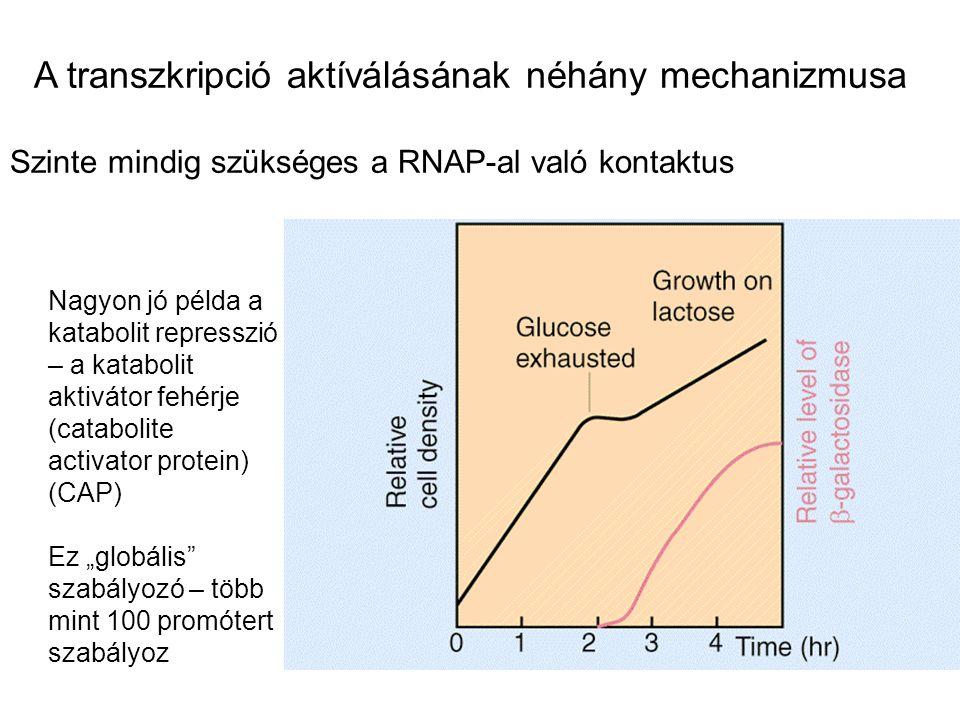 A transzkripció aktíválásának néhány mechanizmusa