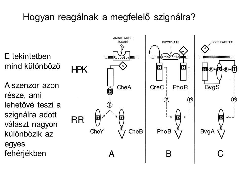 Hogyan reagálnak a megfelelő szignálra