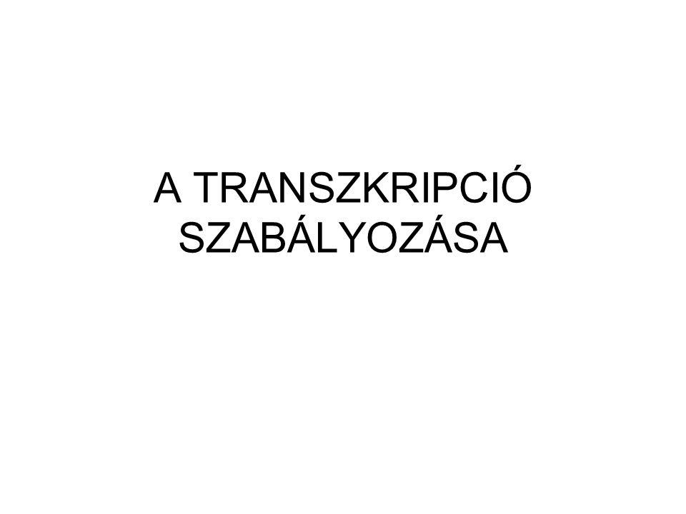 A TRANSZKRIPCIÓ SZABÁLYOZÁSA