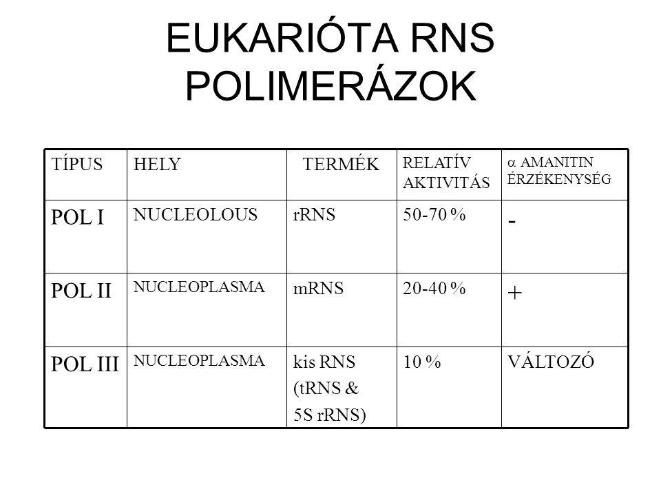 EUKARIÓTA RNS POLIMERÁZOK