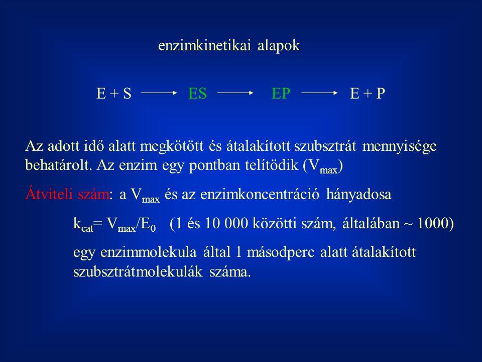 enzimkinetikai alapok