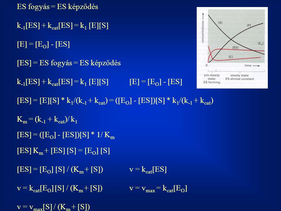 ES fogyás = ES képződés k-1ES + kcatES = k1 ES E = EO - ES ES = ES fogyás = ES képződés.