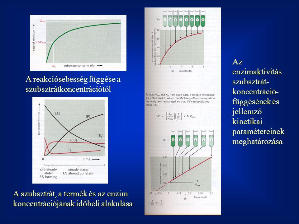 Az enzimaktivitás szubsztrát- koncentráció- függésének és jellemző kinetikai paramétereinek meghatározása