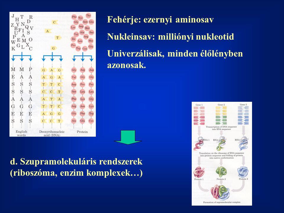 Fehérje: ezernyi aminosav