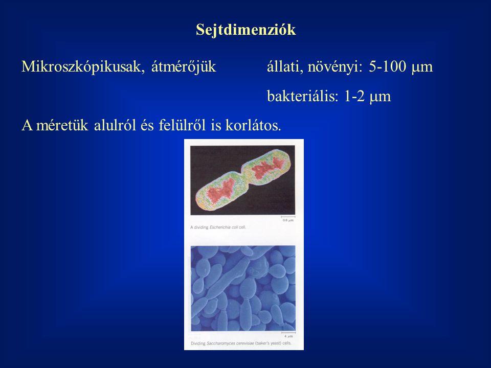 Sejtdimenziók Mikroszkópikusak, átmérőjük állati, növényi: 5-100 mm.