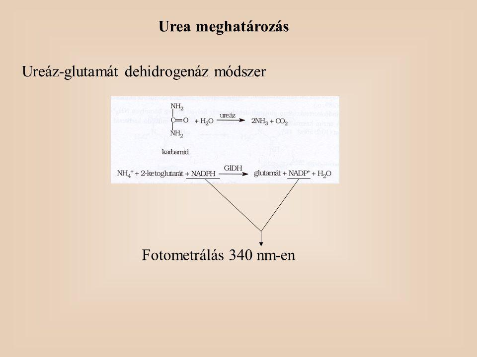 Urea meghatározás Ureáz-glutamát dehidrogenáz módszer Fotometrálás 340 nm-en