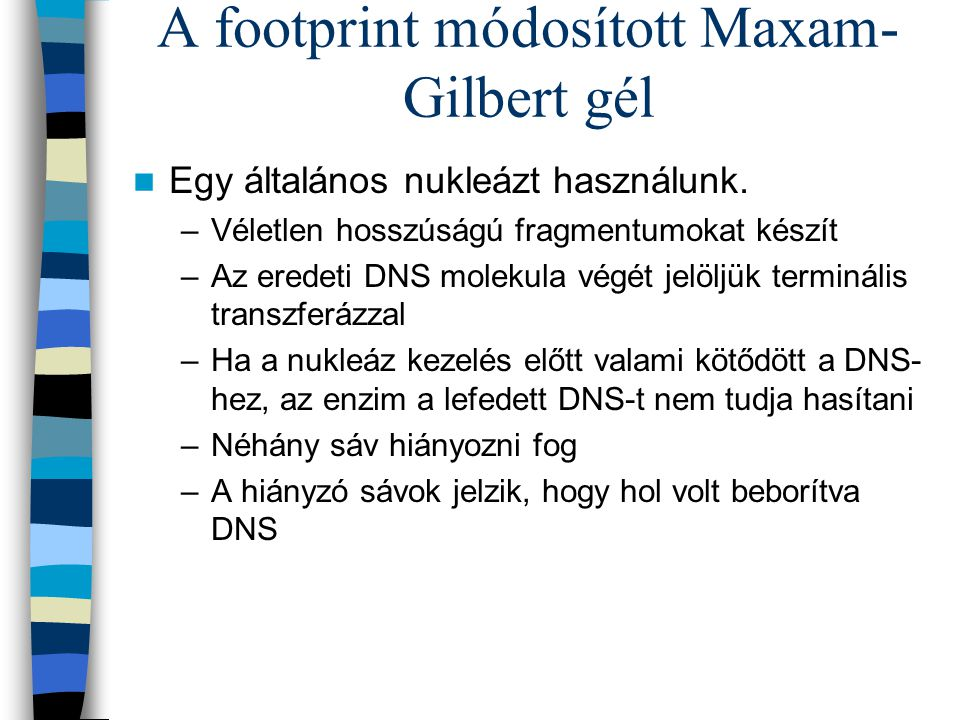 A footprint módosított Maxam-Gilbert gél