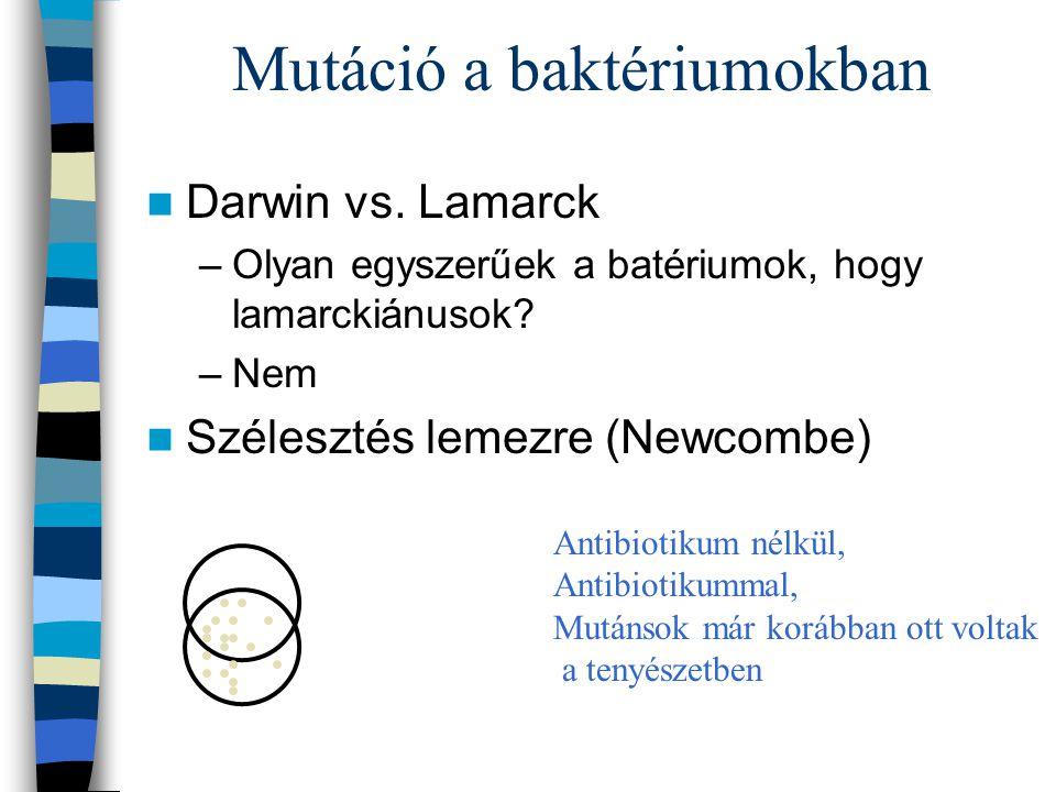 Mutáció a baktériumokban